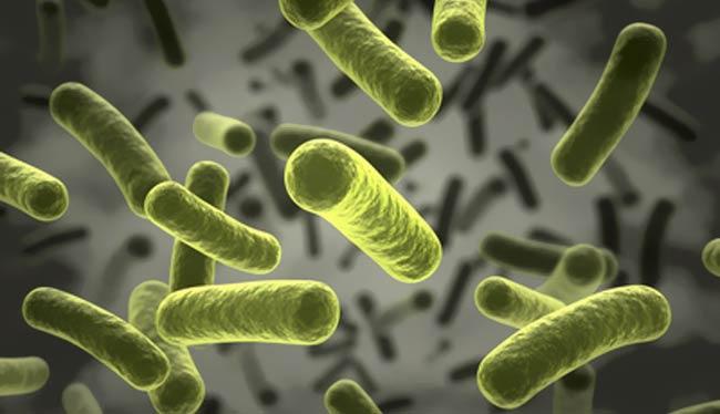 Stäbchen Bakterien © norman blue - Fotolia.com