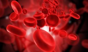Blutzellen
